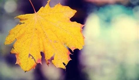 《秋意浓》